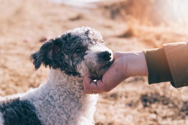 Crop pessoa acariciando cão