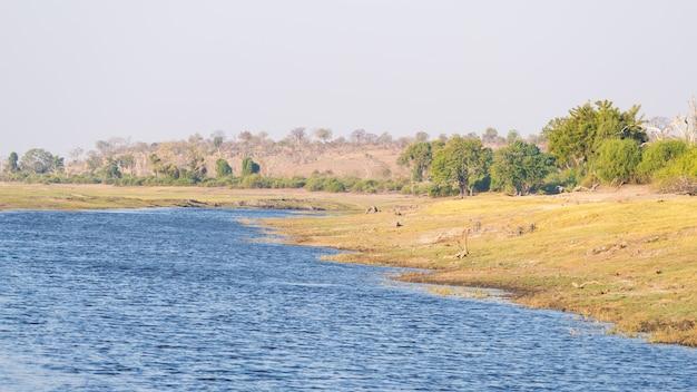 Cruzeiro de barco e safári de vida selvagem no rio chobe, namíbia