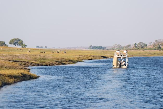 Cruzeiro do barco e safari dos animais selvagens no rio de chobe, beira de namíbia botswana, áfrica. parque nacional chobe