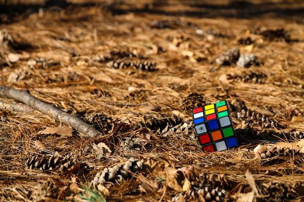 Cubo de rubik é colocado no chão com folhas e flores de pinheiros ao redor.