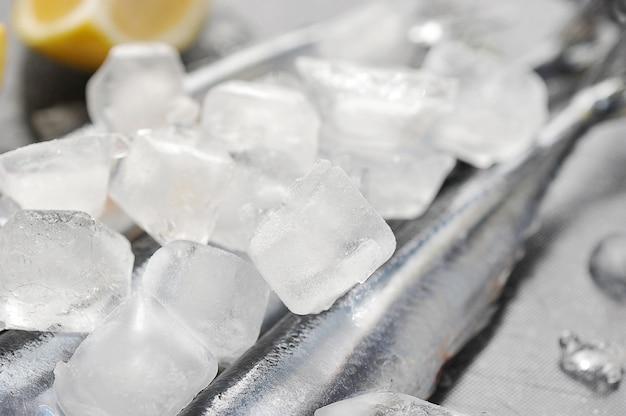 Cubos de gelo e peixe congelado