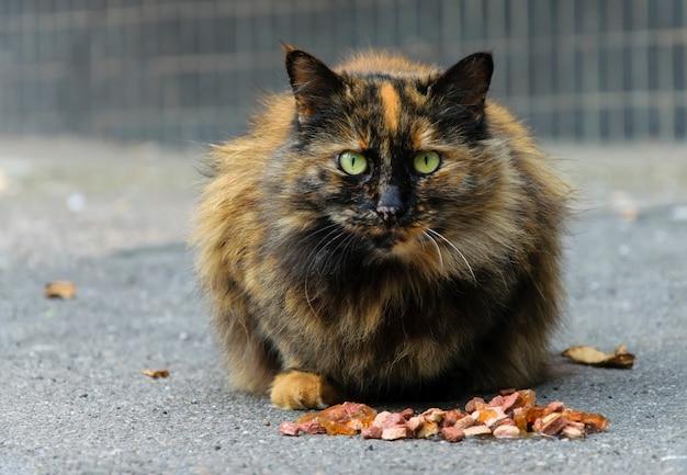 Cuidado de animais de rua