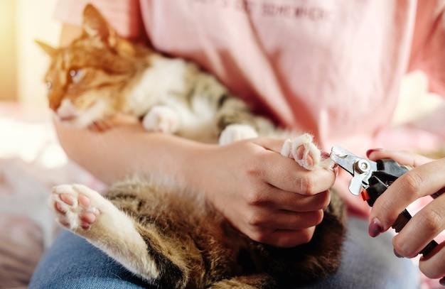 Cuidado de garra de gato