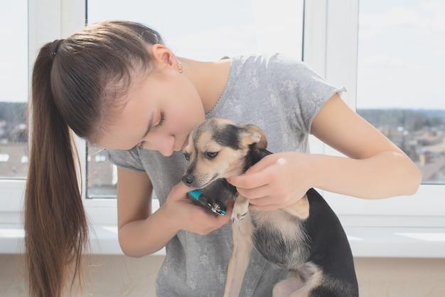 Cuidando das garras de um cachorro. menina segurando uma pata de terrier de brinquedo