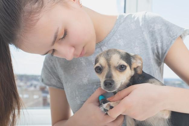 Cuidando das garras de um cachorro. prevenção de infecções nas pernas de um animal Foto Premium