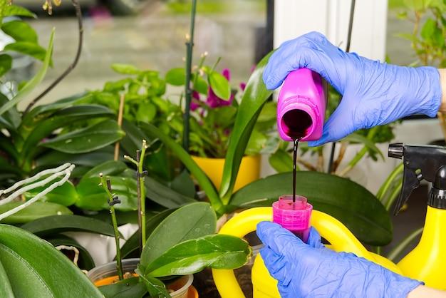 Cuidando das plantas regando-as com um líquido especial
