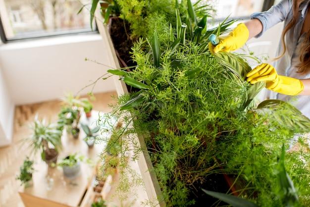 Cuidando das plantas verdes no laranjal