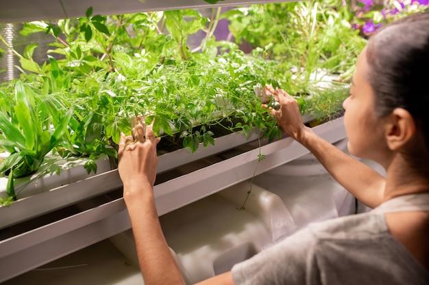 Cultivadora verificando mudas sob lâmpadas brilhantes na prateleira crescendo na estufa