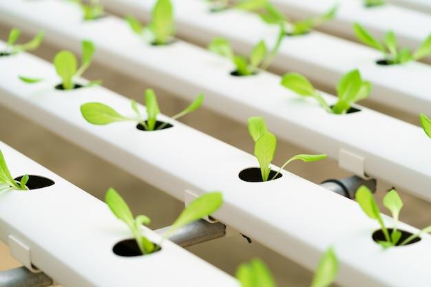 Cultivar vegetais sem usar solo ou chamar outro tipo de cultivo hidropônico de vegetais