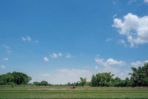 Cultivo de arroz campos de arroz verde com belos céus azuis.