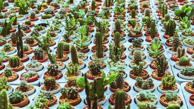 Cultivo de cactos em estações agrícolas