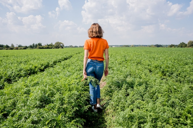 Cultivo de cenouras orgânicas. cenouras nas mãos de um fazendeiro. cenouras recém-colhidas. colheita de outono. agricultura.