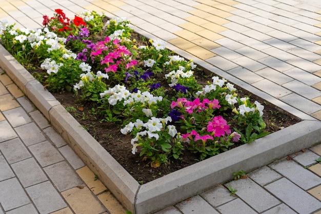 Cultivo de flores no canteiro