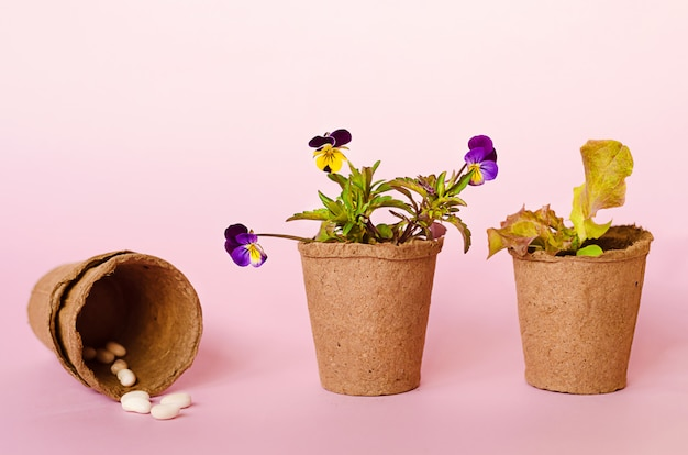 Cultivo de mudas, flores, sementes, legumes, verduras em vasos de turfa. jardinagem primavera, ferramentas, equipamentos.