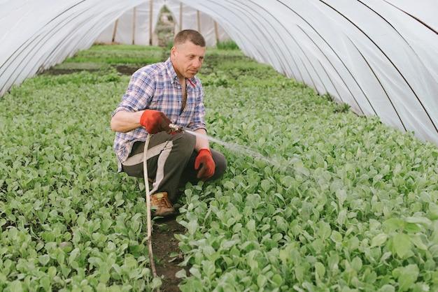 Cultivo de vegetais em casa em um conceito de estufa.
