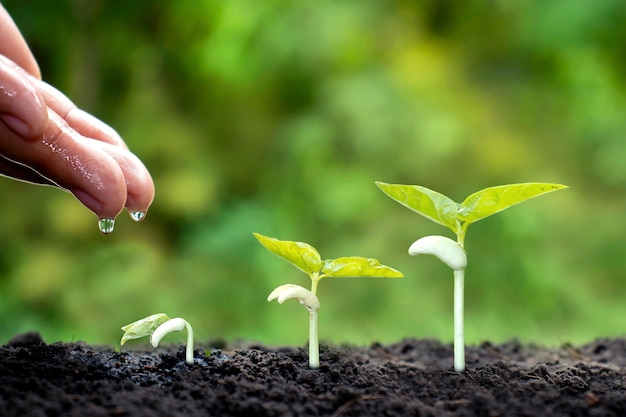 Cultivo em solo fértil e irrigação de plantas, incluindo a exibição de estágios de crescimento da planta, conceitos de cultivo e investimentos para os agricultores.