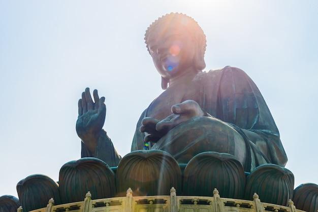 Cultura de lótus grande cabeça asiático