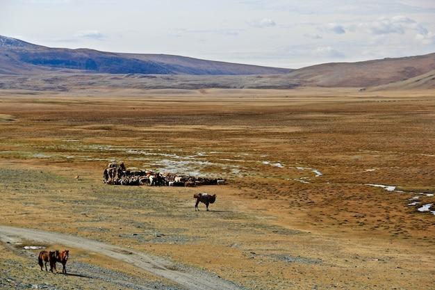 Cultura e estilo de vida nômades do cazaquistão