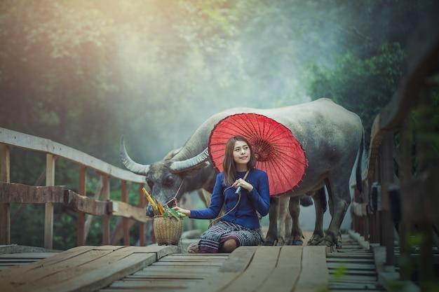 Cultura tradicional tailandesa de mulher bonita com búfalo
