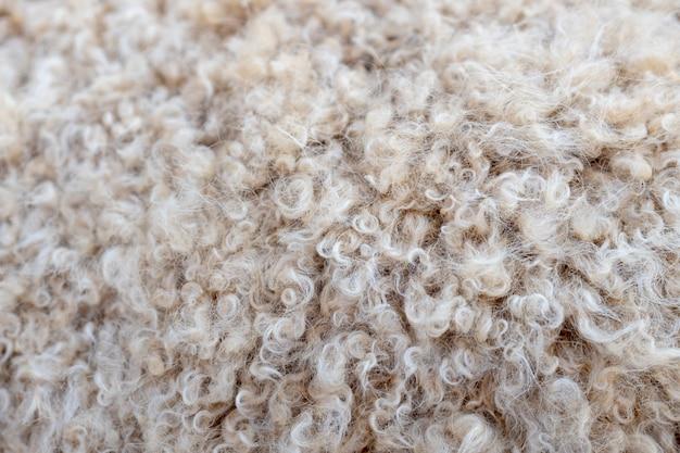 Curly casaco de cordeiro.