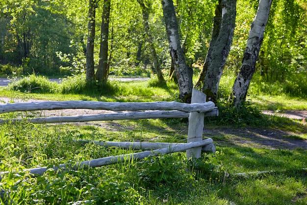 Curral de troncos de árvores pintados de branco na orla da floresta