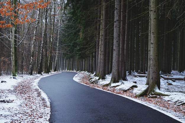 Curvando a estrada através de uma floresta em um dia de inverno