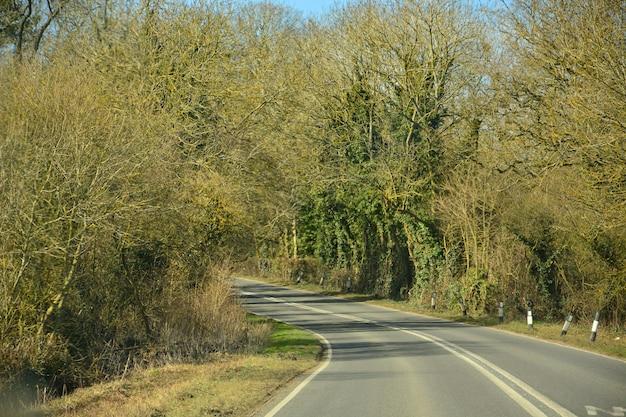 Curvando a estrada entre a árvore