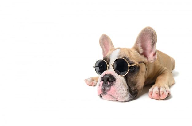 Cute bulldog francês usar óculos de sol