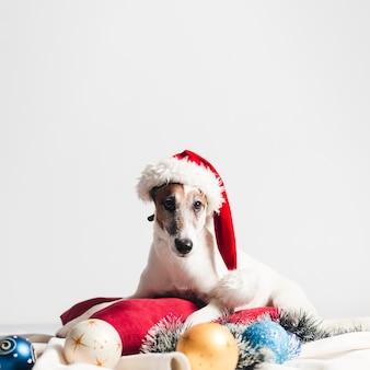 Cute jack russel com decoração de natal