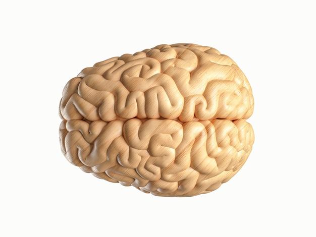 D ilustração do cérebro humano feita de madeira