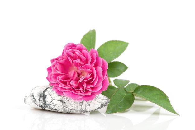 Damasco rosa na rocha isolada.