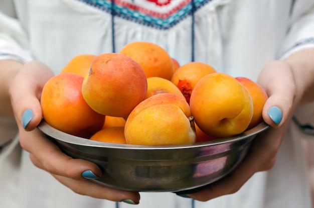 Damascos maduros deliciosos nas mãos femininas