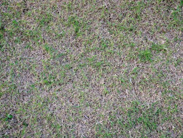Danos de um gramado verde