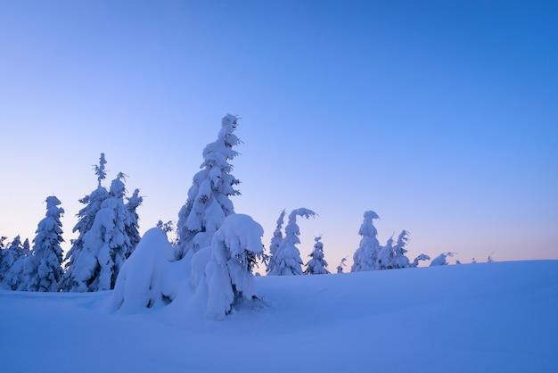 Das maravilhas do inverno com pinheiros cobertos de neve e grandes montes de neve. paisagem sombria em azul