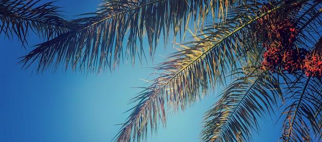 Data palmeiras contra o céu.