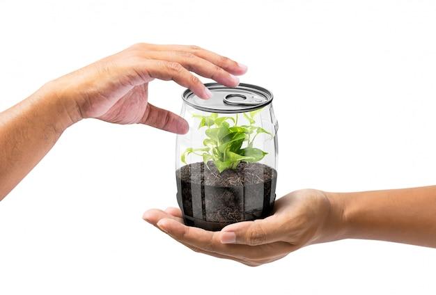 Dê a planta em lata