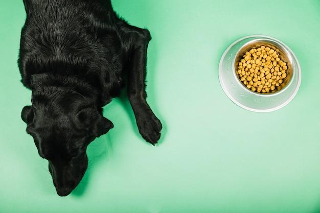 De cima cachorro perto de comida