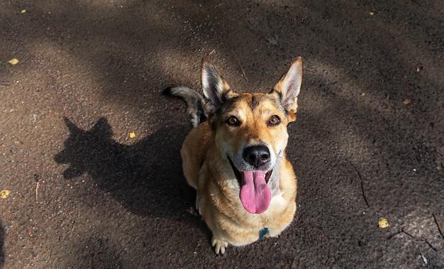 De cima, um cachorro feliz olhando para a câmera enquanto está sentado em uma estrada molhada e suja na natureza