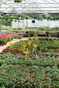 De dentro da estufa a um centro comercial de jardinagem