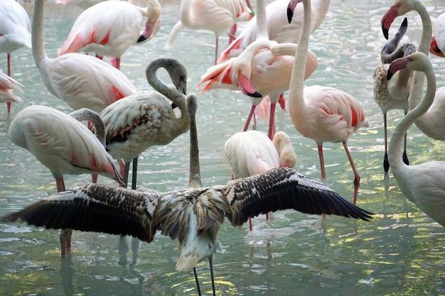 De flamingos na água