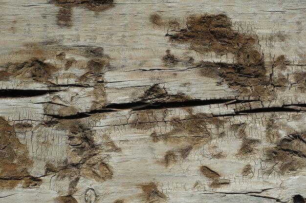 De madeira com manchas de mofo