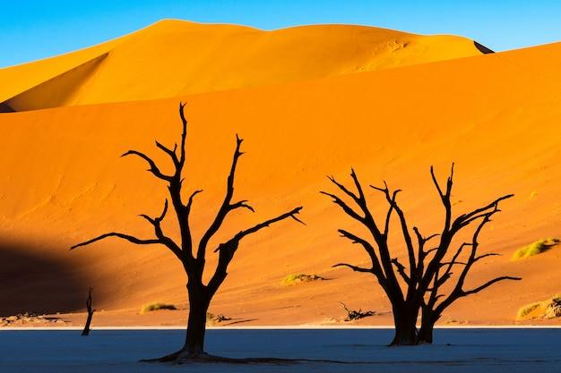 Deadvlei no parque nacional de namib-naukluft sossusvlei em namíbia - árvores inoperantes de camelthorn contra dunas de areia alaranjadas com céu azul.