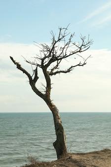 Declive com árvore solitária na praia do mar