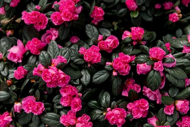 Decoração com lindas flores cor de rosa