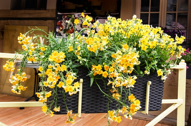 Decoração da esplanada de verão com gavetas suspensas com flores amarelas da nimesia