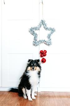 Decoração de casa vermelha com estrelas e bolas torcendo para o ano novo e o natal, fundo, brilhante, cachorrinho sentado