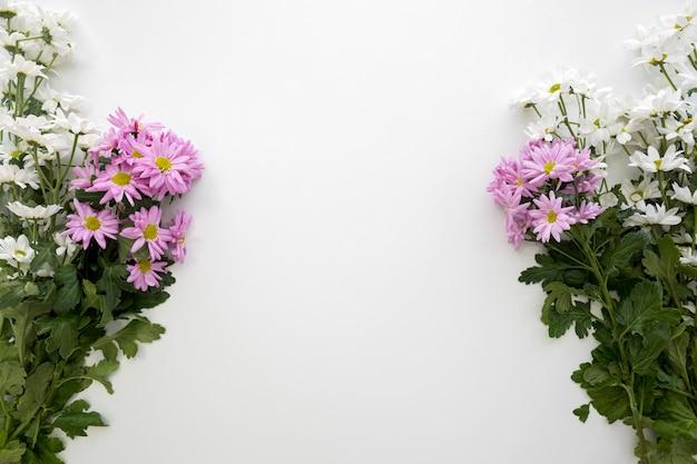 Decoração de flores brancas e rosa daisy sobre fundo branco