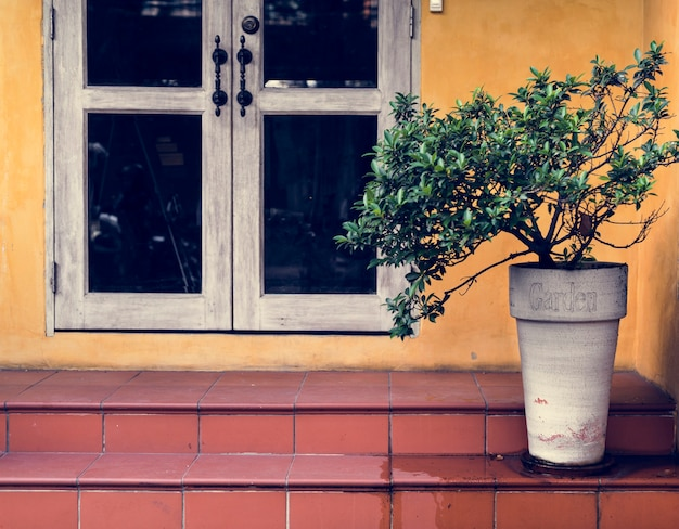 Decoração de folhagem floral natural de planta de casa