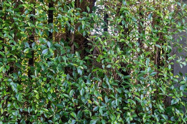 Decoração de jardim com folhas verdes e fundo verde natureza folhagem de trilho de aço