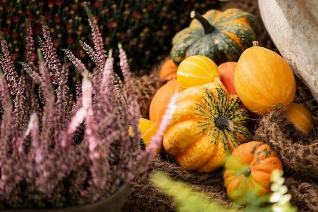 Decoração de outono com pequenas abóboras coloridas e flores de urze rosa